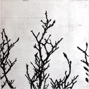 magnoliagleam